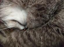 Our neighbour cat Tatcher